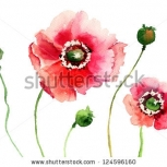 Stock Photo Stylized Poppy Flowers Illustration 124596160