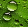 Stock Photo Green Leaf With Water Droplets Closeup 54234244